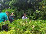 tanaman-porang-yang-dibudidayakan-sudadi-petani-di-desa-kadirejo.jpg