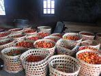 tomat-tomat-yang-akan-diproduksi-menjadi-torakur_20170112_124621.jpg