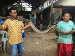 ular-piton-di-manyaran-semarang_20171114_193502.jpg