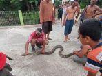 ular-piton-yang-berhasil-diamankan-warg022021.jpg