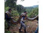 ular-piton_20180212_192428.jpg
