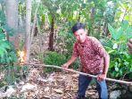 warga-membakar-sarang-ulat-bulu-yang-menyerang-desa-kedung-gading_20180416_143000.jpg