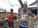 warga-tegal-aditya-kanan-dan-pamannya-zali-kiri-menunjukkan-ular-sanca.jpg