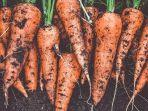 wortel-kecantikan.jpg