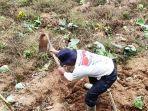 yakub-mencangkul-lahannya-untuk-ditanami-kentang-di-lereng-gunung-prau-kejajar-wonosobo.jpg