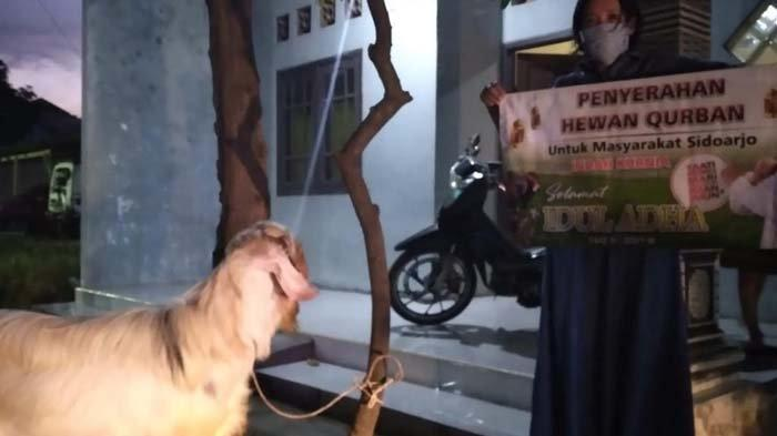 Anggota DPR RI Indah Kurnia Sebar 30 Kambing Kurban untuk Warga Surabaya dan Sidoarjo