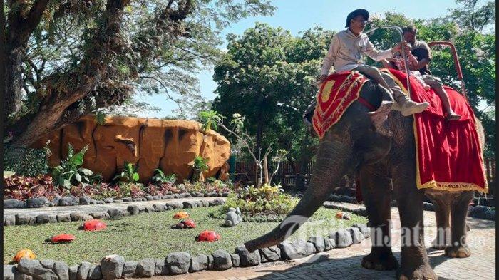 LIVE : Libur Lebaran, Kebun Binatang Surabaya Hadirkan Konsep Anyar di Area Gajah