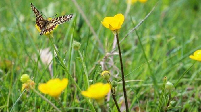 5 Arti Mimpi Tentang Kupu-kupu, Lambang Cinta dan Motivasi, Waspada Jika Mimpi Berburu Kupu-kupu