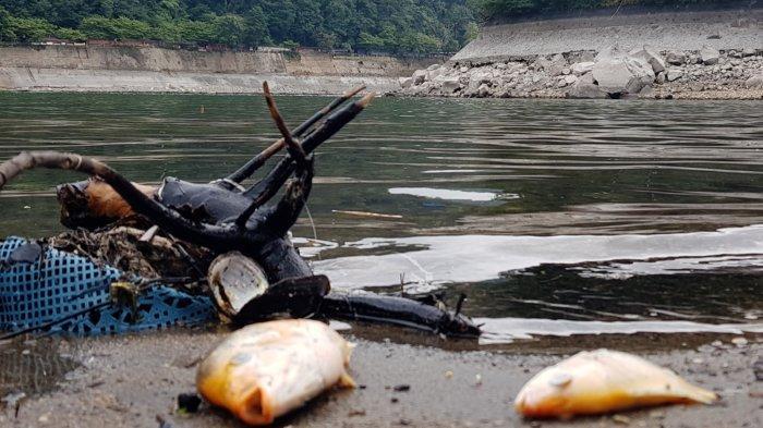 Akibat Polusi Air, Ikan di Telaga Sarangan Magetan Mendadak Mati