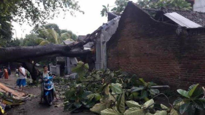 Hujan Lebat, Pohon Berukuran Besar Tumbang Menimpa Rumah Warga di Pungging Mojokerto