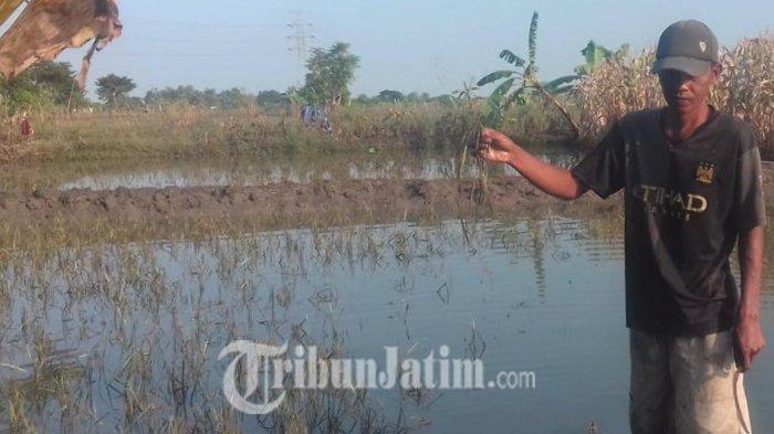 638 Hektare Sawah Padi di Jatim Rusak Terendam Banjir, Distan Sarankan Petani Asuransikan Lahan