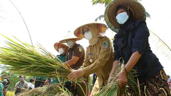 Pemkab Banyuwangi Gelar Festival Padi, Beri Dukungan Lahan Pertanian Pangan Berkelanjutan