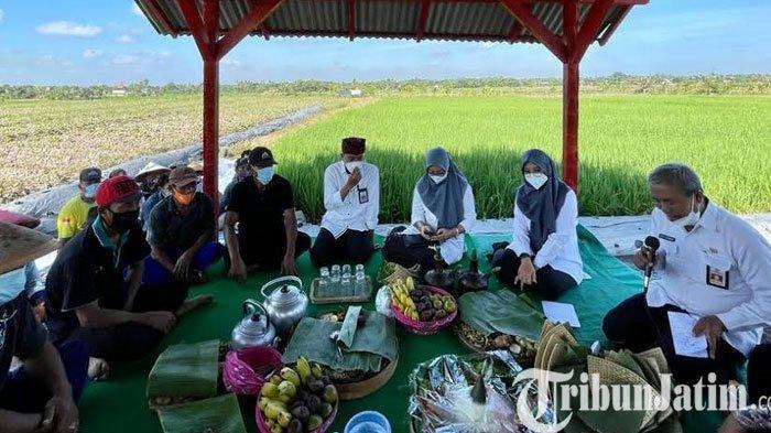 Bersama Petani, Bupati Banyuwangi Ipuk Tumpengan Peringati Hari Lahir Pancasila