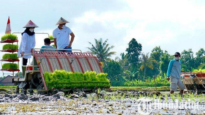 Banyuwangi Tanam Perdana Metode Agro Solution, Produktivitas Pertanian Digenjot Dua Kali Lipat