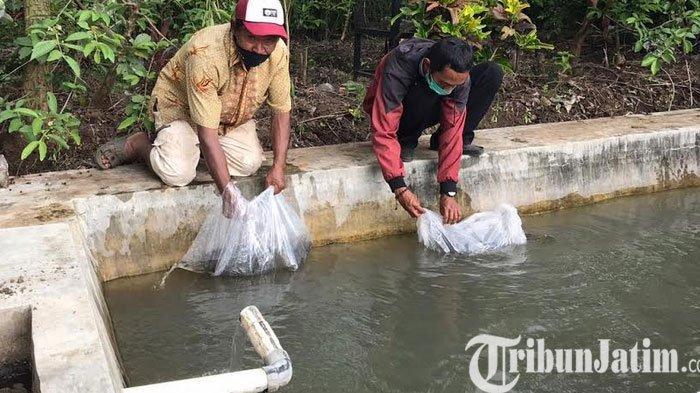 Pemkot Batu Segera Salurkan 141 Ribu Benih Bibit Ikan NIla