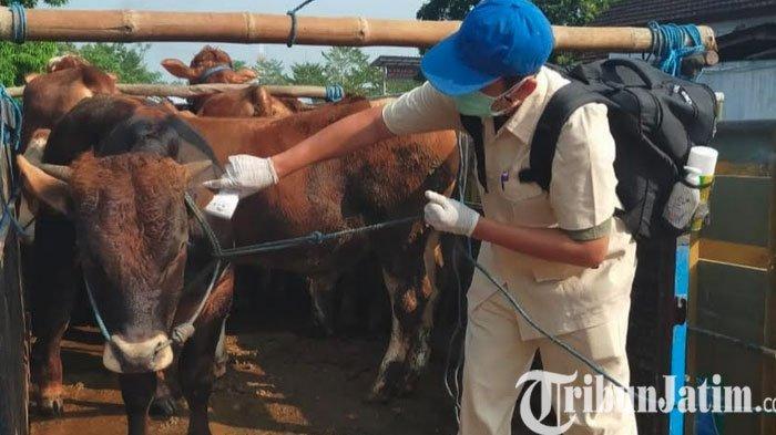 Antisipasi Penyakit Antraks, Perketat Pengawasan Perdagangan Sapi di Pasar Hewan Dimoro Kota Blitar