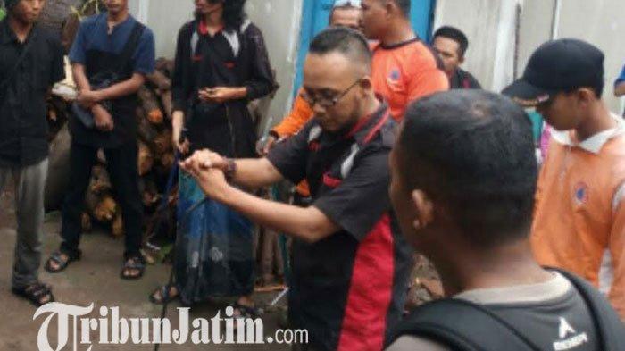 Teror Kobra di Jombang Berlanjut, BPBD Temukan Banyak Sisik dan Cangkang Telur Ular