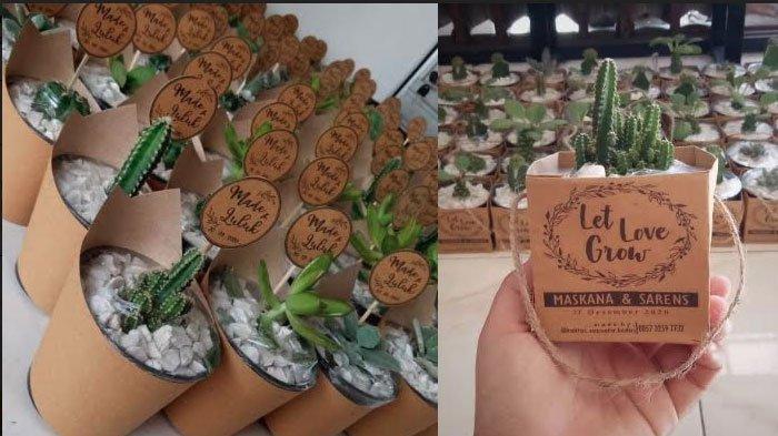 Souvenir Kaktus Ramah Lingkungan, Bisa Jadi Alternatif untuk Pecinta Tanaman Hias