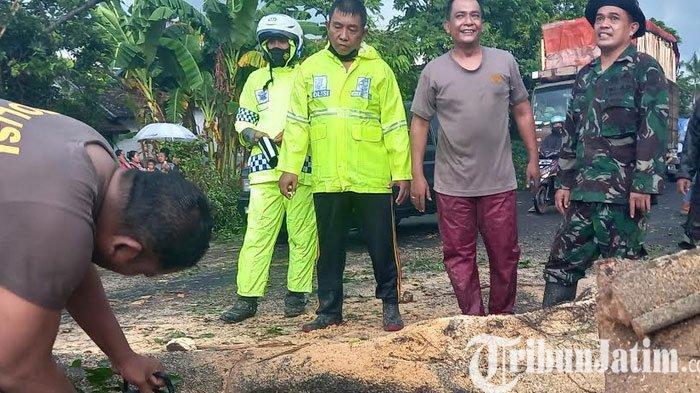 Hujan Deras Dan Angin Kencang Terjang Lumajang, Pohon Tumbang Tutup Jalan Nasional