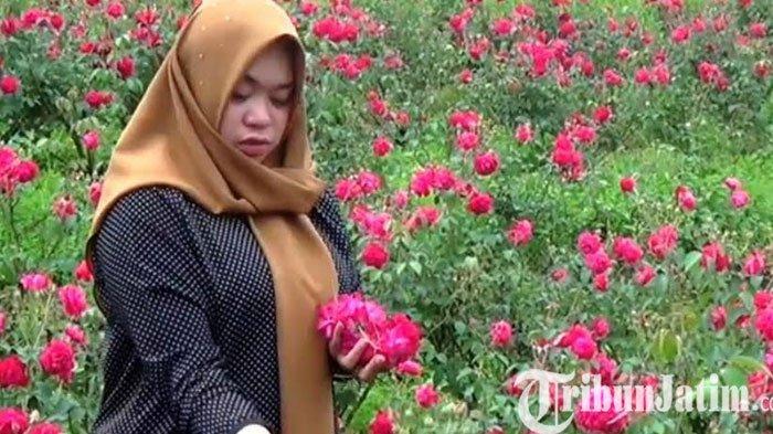 Awalnya Tanam Bungan Mawar Merah Dicibir, Kini Jadi Panutan Petani Magetan