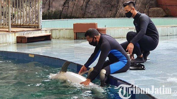 24 Tahun Berdiri, TSP Berhasil Breeding Dolphin Untuk Pertama Kalinya