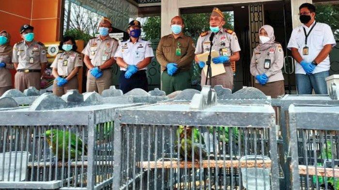 Karantina Pertanian Surabaya Gagalkan Penyelundupan 259 Burung Tanpa Dokumen