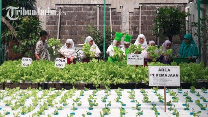 Tanamkan Jiwa Wirausahawan, SD Al Hikmah Surabaya Ajak Siswa Tanam Selada