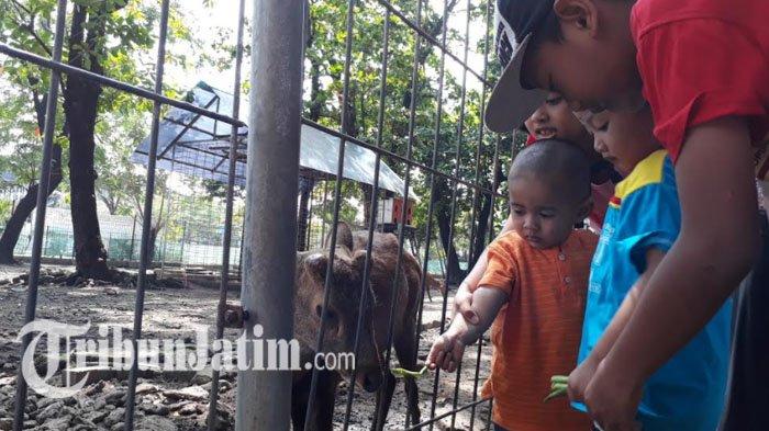 Asyik, Taman di Surabaya Siap Dibuka Kembali, 9 Lokasi Ini di Tahap Awal, Simak Daftarnya di Sini