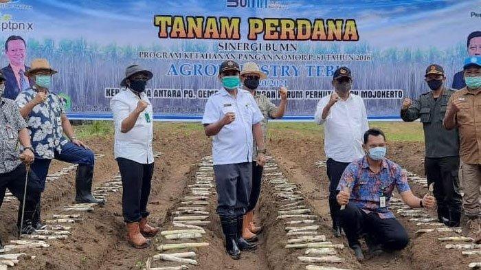 Jamin Pasok Bahan Baku Tebu, PTPN X Tanam Perdana Lahan Agroforestry