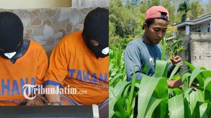 BERITA TERPOPULER JATIM: Kasus Penggelapan Emas 9 Kg hingga Serangan Hama Ulat di Kabupaten Madiun