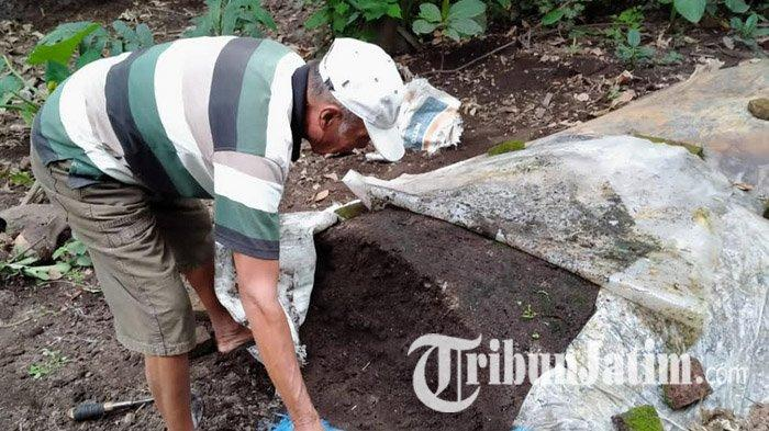 Hemat di Ongkos, Petani di Kediri Membuat Sendiri Bokasi, Pupuk Organik yang Manfaatkan Kotoran Sapi