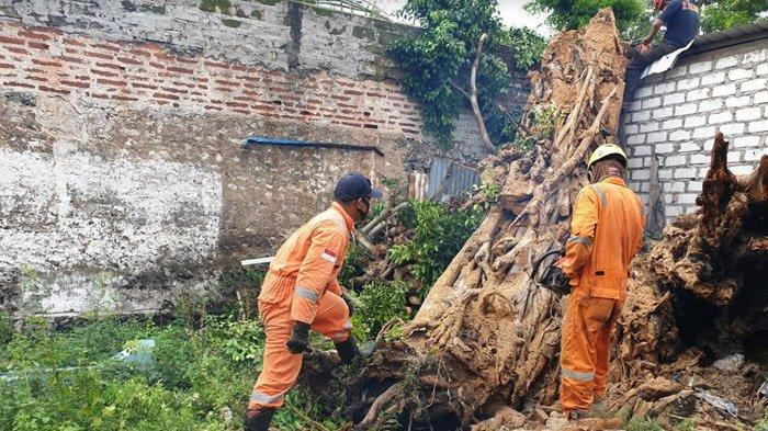 Pohon Beringin yang Sempat Buat Gempar Warga Tuban Karena Terbakar Tanpa Sebab Tumbang Timpa Warung