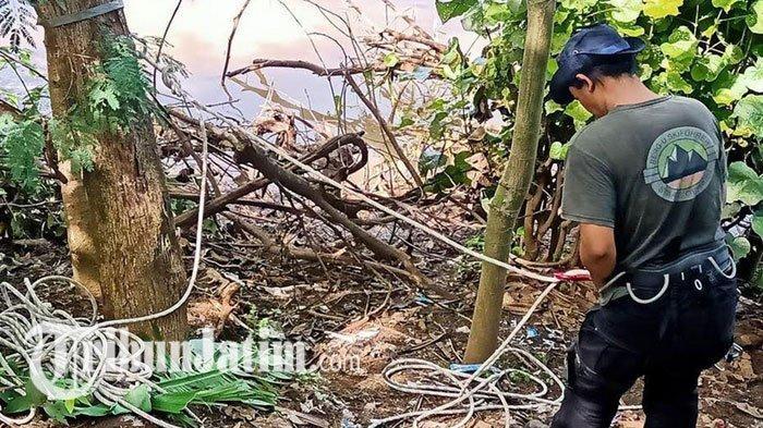 Buaya Sungai Brantas Diduga Lebih Dari Satu Ekor