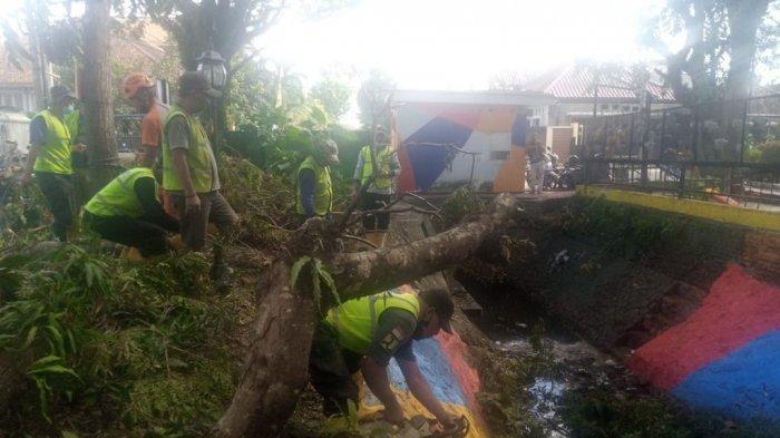 Akibat Angin Kencang, Pohon Sengon di Kota Malang Tumbang