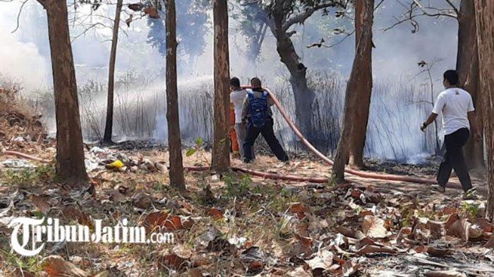 Warga Panik, Api Melalap Lahan Pohon Jati 150 m2 di Belakang Perumahan Eks Polri Pamekasan