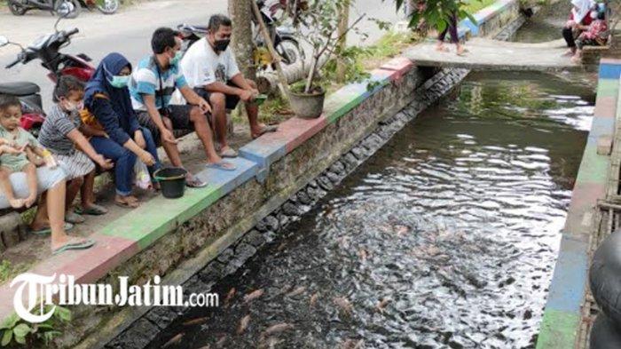 Jaga Lingkungan, Pemuda Pinggir Kali Kelurahan Sentul Manfaatkan Saluran Irigasi untuk Budidaya Ikan