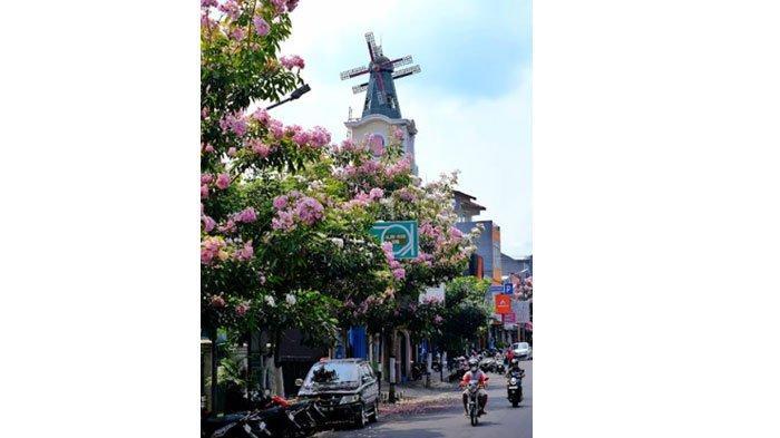 Warna-warni Bunga Tabebuya Percantik Jalanan di Kota Batu, Berikut 5 Lokasinya
