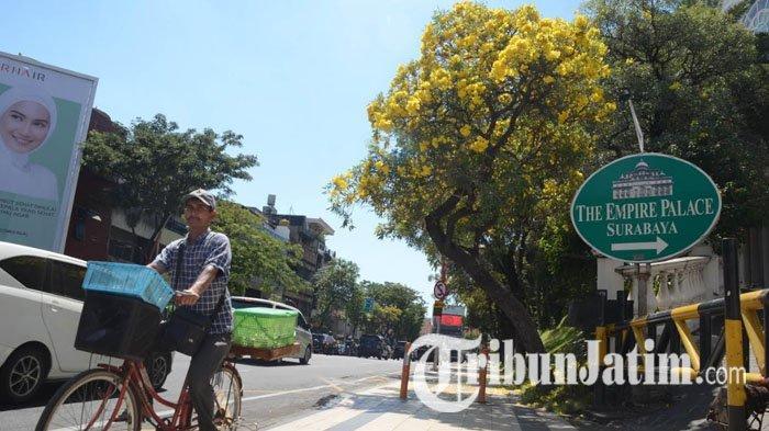 Bunga Tabebuya Kembali Hiasi Kota Surabaya, Kini Lebih Cerah dengan Warna Kuning