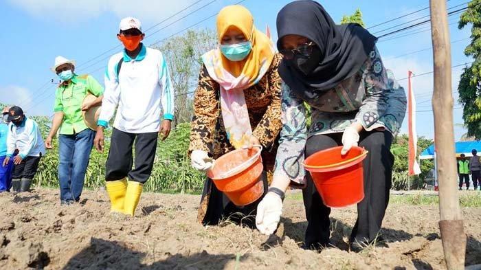 Petani Tanaman Pangan di Banyuwangi Digelontor Bantuan 582 Ton Benih Berkualitas