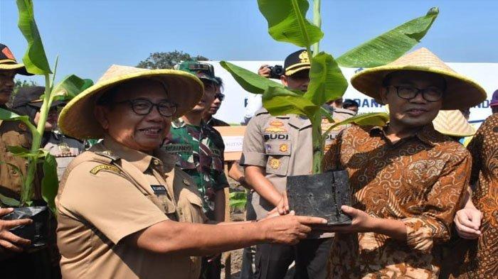 Pemkab Blitar Gandeng Investor Kembangkan Hortikultura Pisang Cavendish Beorientasi Ekspor