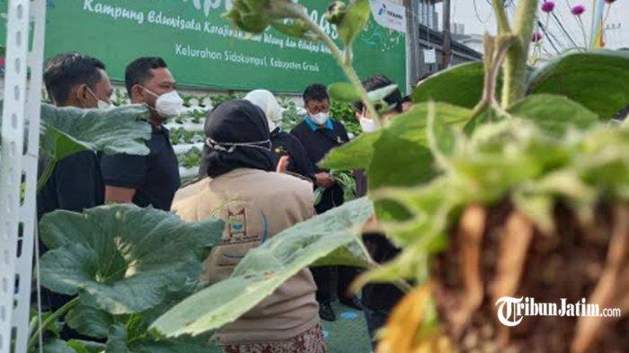 Bupati Gresik Gus Yani Terpesona Lihat Eduwisata Kampung Kreasi: Berkebun Hidroponik Layak Ditiru