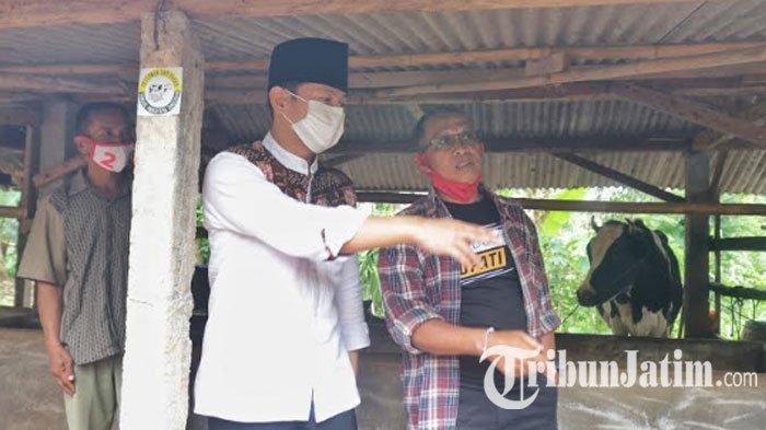Sambangi Kelompok Tunggal Margo, Cabup Mas Ipin Dorong Pengembangan Populasi Sapi Perah di Pule