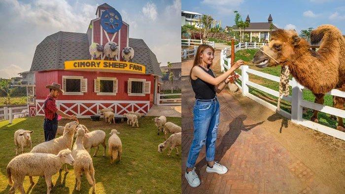 Harga Tiket dan Jam Buka Cimory Dairyland Prigen, Tempat Wisata di Pasuruan, Cocok Isi Libur Weekend