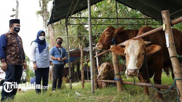 SIG Salurkan Ratusan Hewan Kurban, Bantu Kurangi Beban Mayarakat di Tengah Pandemi Covid-19