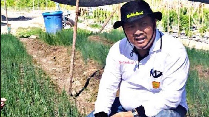 Genjot Produksi Bawang Putih, Kementan Terapkan Aturan Wajib Tanam Agar Impor Bisa Dihentikan