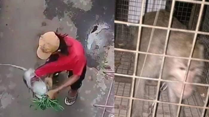 Viral Monyet Ini Dianiaya untuk Mengamen, Penyiksa Ngaku: Si Monyet Harus Dikosongkan Isi Pikirannya
