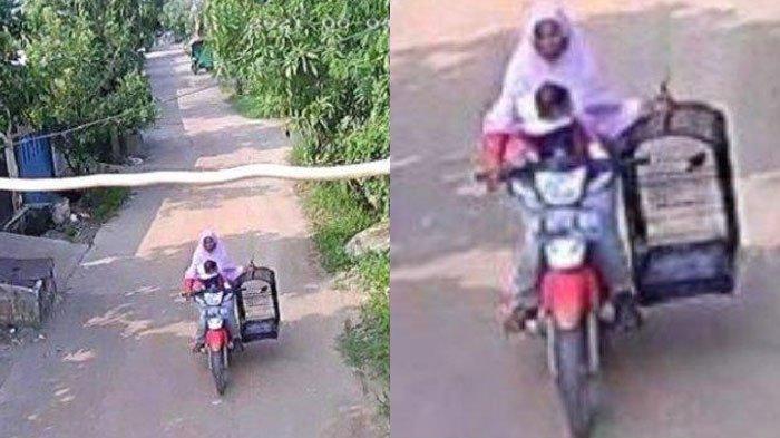 Aksi Ibu Curi Burung Murai Terekam CCTV, Tenteng Sangkar Sambil Gendong Balita, Videonya Viral