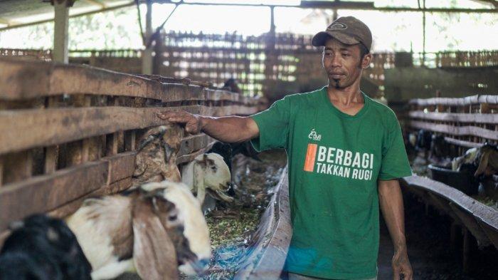 Optimalisasi Wakaf untuk Entas Kemiskinan, Laznas LMI Kembangkan Ternak Nusantara