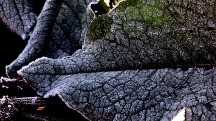 Asyik, Menikmati Embun Beku di Kawasan Gunung Bromo