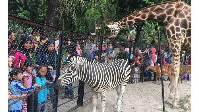 Harga Tiket Masuk Kebun Binatang Surabaya (KBS), Tetap Buka saat Libur Natal dan Tahun Baru 2021